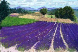 Lavendel veld Provence verkocht
